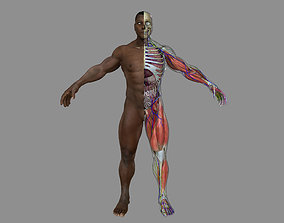 Full African American Male Anatomy 3D model