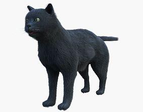British CAT 3D model