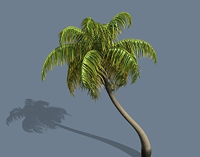 Loop Wind Coconut Palm tree 3D