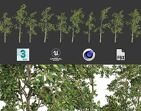 3D asset Animated trees