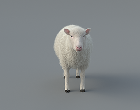 animal 3D animated Sheep