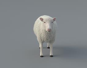 3D animated Sheep