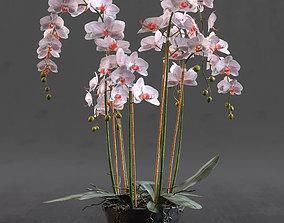 Orchid 3D model orchid