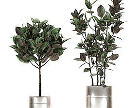 Ficus elastica in a chrome flowerpot 787 3D