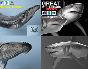 humpback whale plus White shark both rigged 3D model