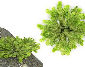 3D model Moss lichen Grean