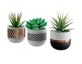 3D model Succulent collection 1 PBR Cactus
