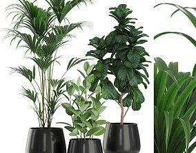 Plants collection 464 3D model