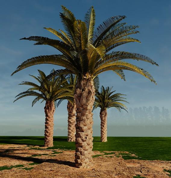 Photoscanned palm trees