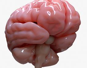 3D Brain Human Anatomy