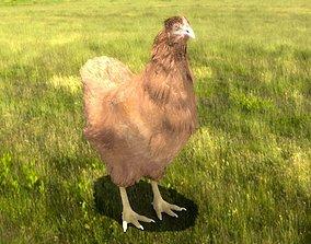 3D model rigged Chicken