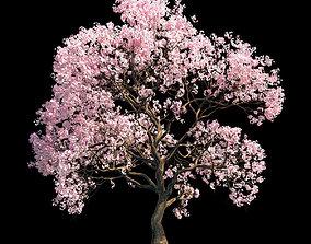 Sakura 9 3D