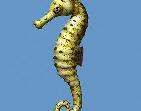 3D model Hippocampus