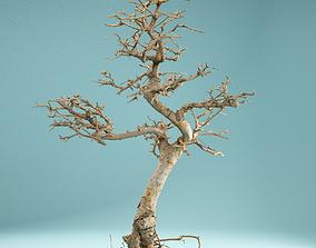 RAW SCAN Dead Bonsai Tree High Poly 09 3D