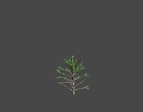 Oaktree 3D model