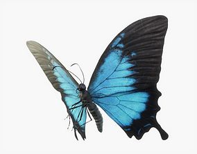 3D model Papilio Ulysses Butterfly Rigged