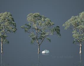 3D model Eucalyptus Willow Trees