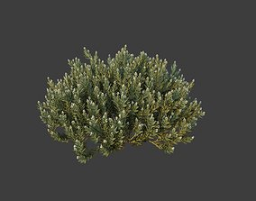XfrogPlants Eshvarak - Rhazya Stricta 3D model