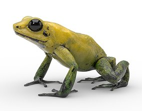 Frog - Golden Poison Dart Frog 3D model