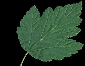 Bladderwort leaf 3D asset