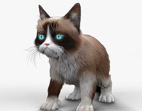 3D Grumpy Cat HD