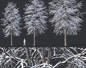 Tilia europaea Nr 7 H11-14m Three winter tree set 3D