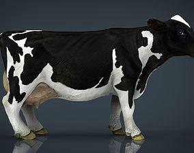 Milk Cow 3D asset