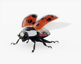 Ladybug Rigged 3D asset