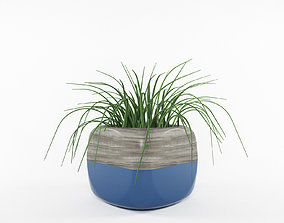 Plant pot decorative 3D