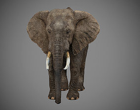 3D Elephant wild