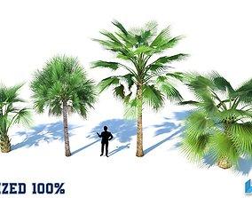 Palm Trees Set Optimized 3D asset