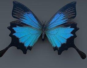 3D model Blue Butterfly