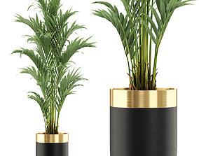 Plants collection 481 3D
