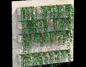 Box ivy 3D model