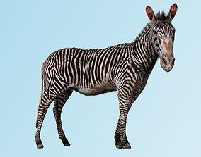Zebra Zoological Specimen 3D model animated