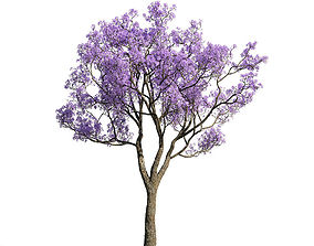 3D model Jacaranda mimosifolia 33 am154