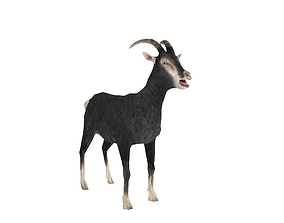 Goat Model 3D