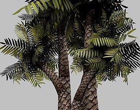 Palm-Tree 3D model