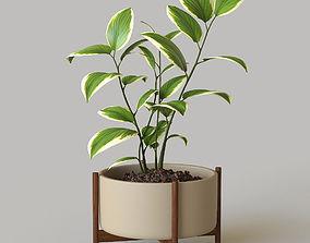 pot 3D Pot plant