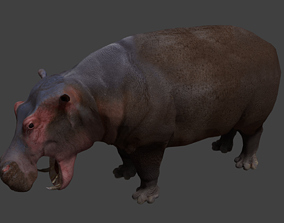 Hippopotamus 3D asset animated game-ready
