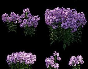 Phlox paniculata purple flame 02 3D