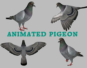 3D asset Realistic Animated Rock Pigeon