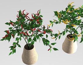 pepper plant 3D