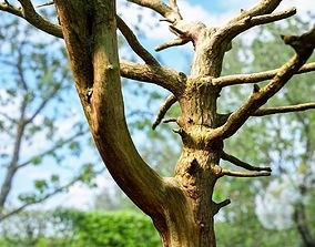 3D model Dancing Tree Photorealistic Asset