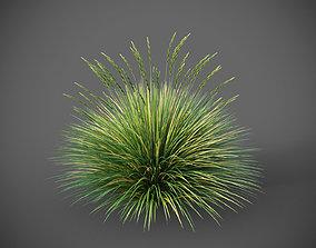 XfrogPlants Basket Grass - Lomandra Longifolia 3D