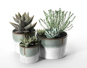 3D model Succulent Pot Set with Echeveria and Rosemary