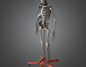 Lab Skeleton - CLA - PBR Game Ready 3D model
