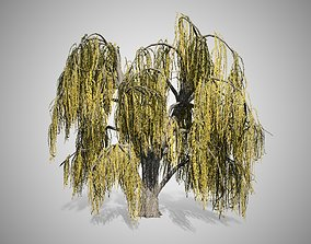 3D asset Weeping Willow Fall Tree