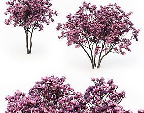 3D Magnolia Liliflora
