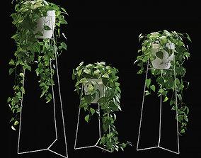 3D model Scandens plant 3